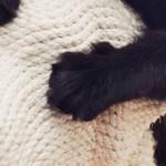 Сладкая месть: Когтеточки в виде собак помогают котам бороться со стрессом