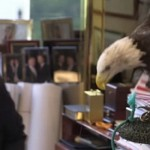 Миллиардера Дональда Трампа атаковал орел по кличке дядя Сэм