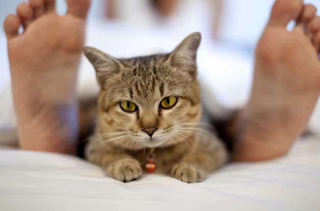 Кот и человек на кровати