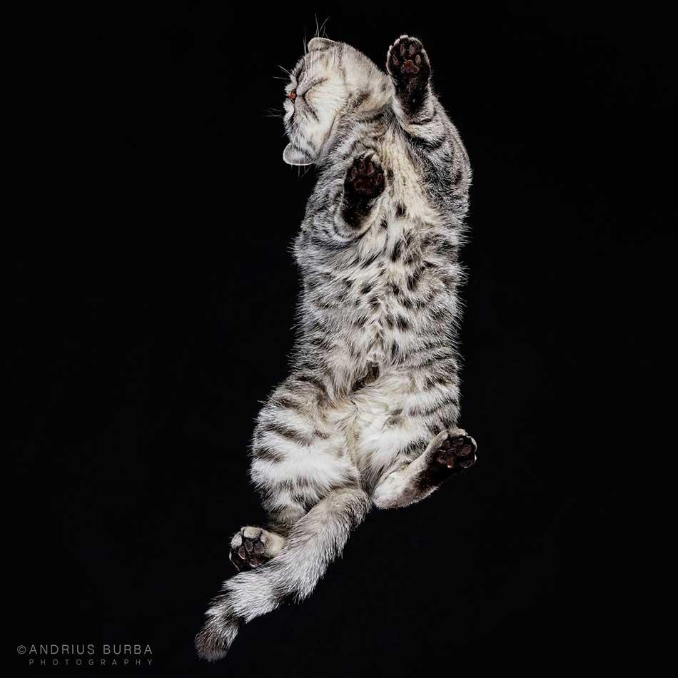 cats_beneath_12