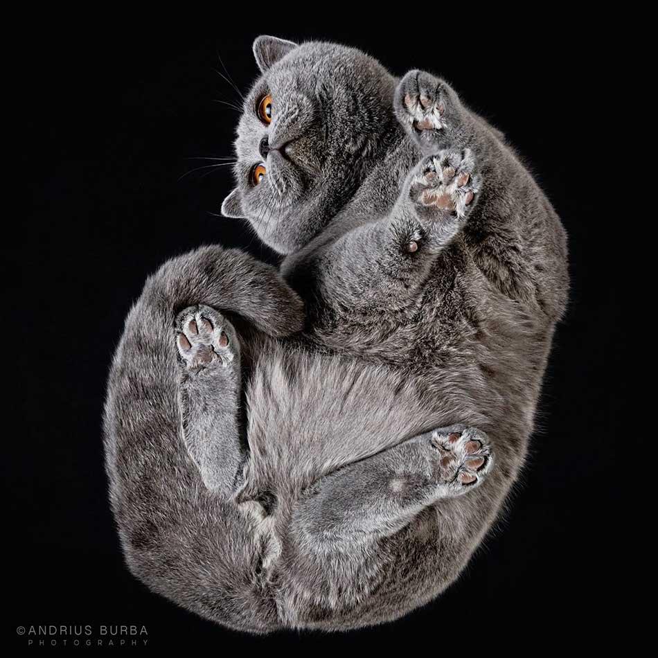 cats_beneath_13