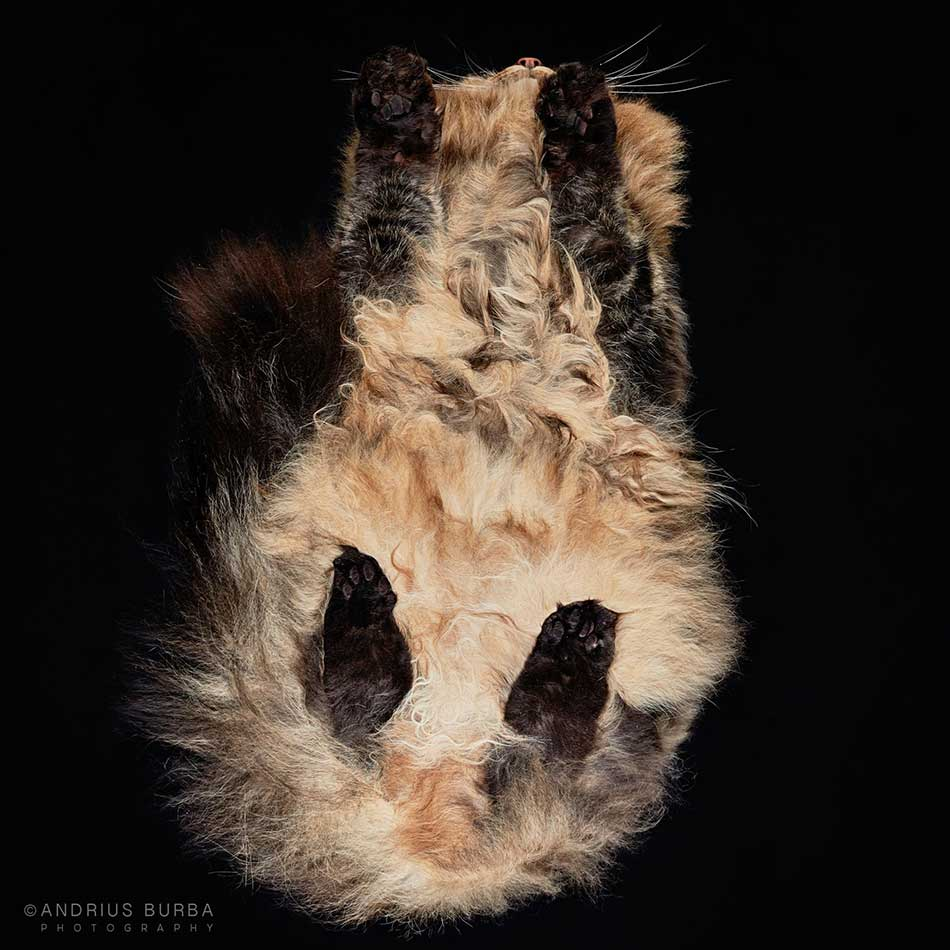 cats_beneath_14