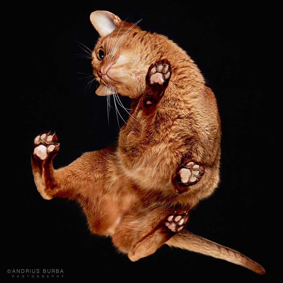 cats_beneath_15
