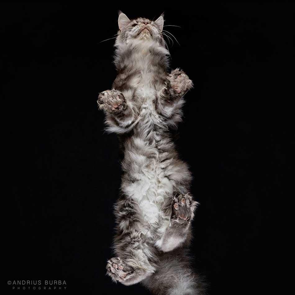 cats_beneath_16