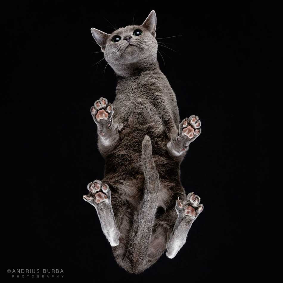 cats_beneath_2