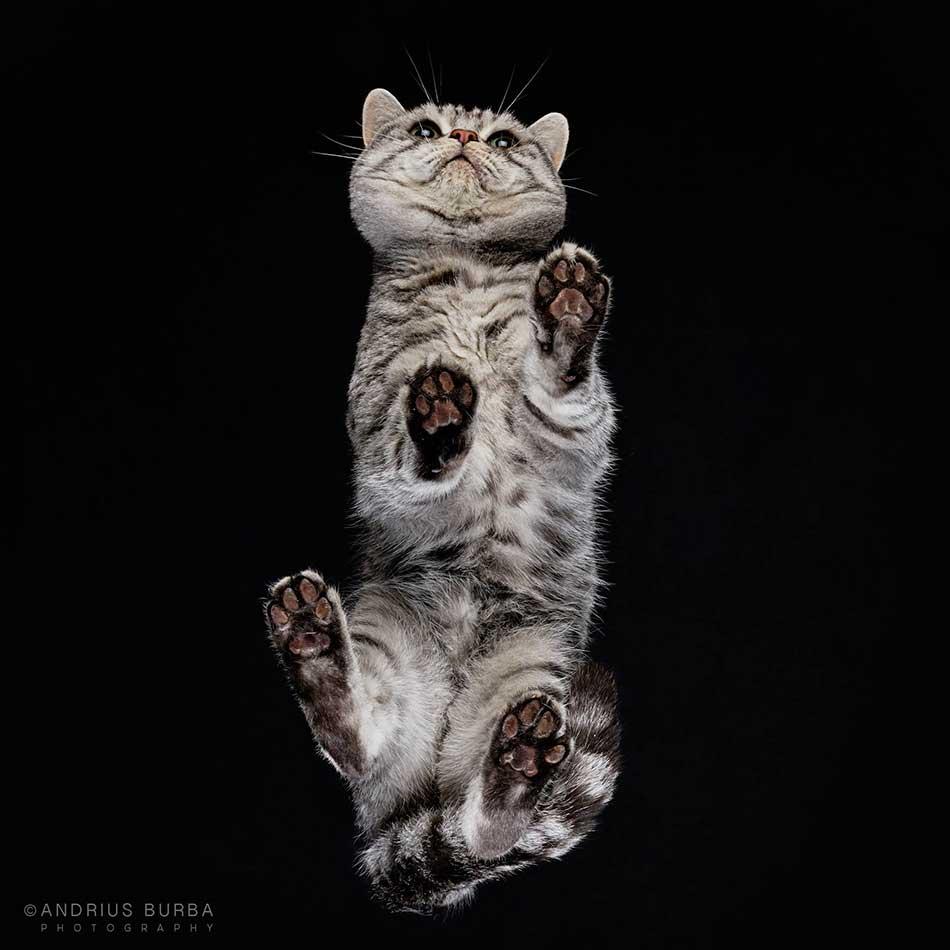 cats_beneath_3