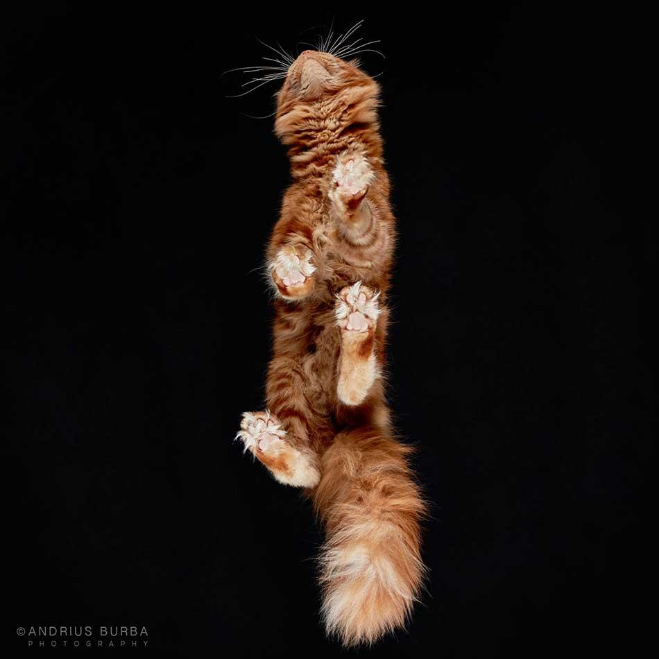 cats_beneath_5