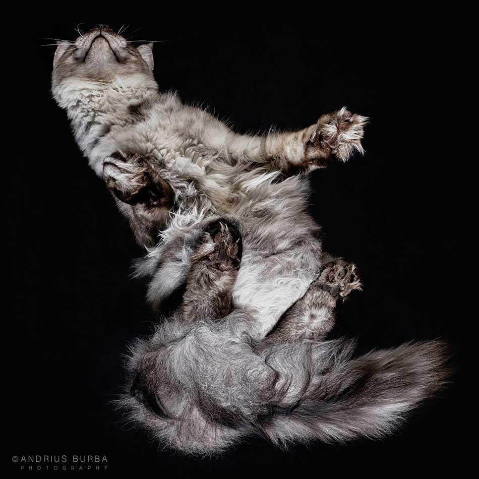 cats_beneath_8