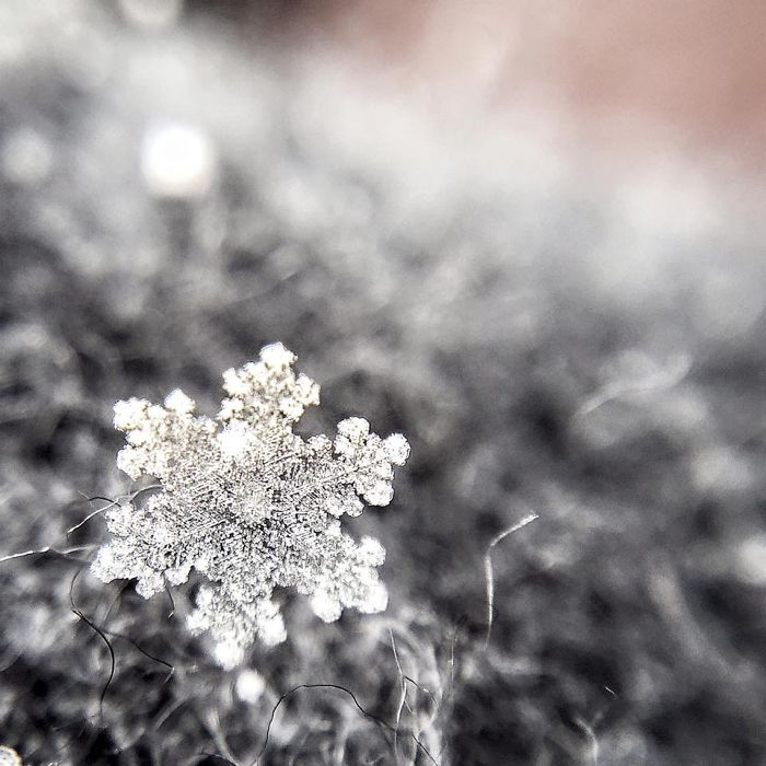 magic-of-snow-i-try-to-capture-a-perfect-snowflake-4__700