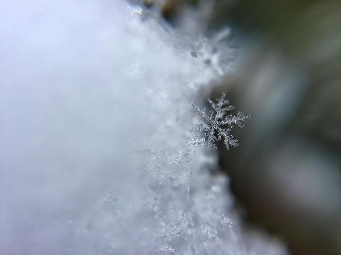 magic-of-snow-i-try-to-capture-a-perfect-snowflake-8__700