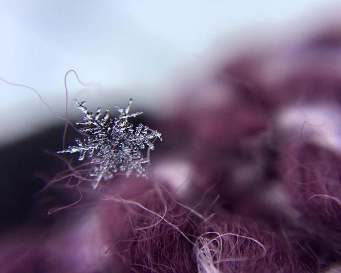 snowflakes-3__8801