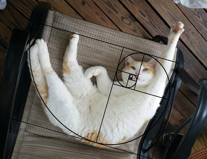 01-fibonacci-composition-cats