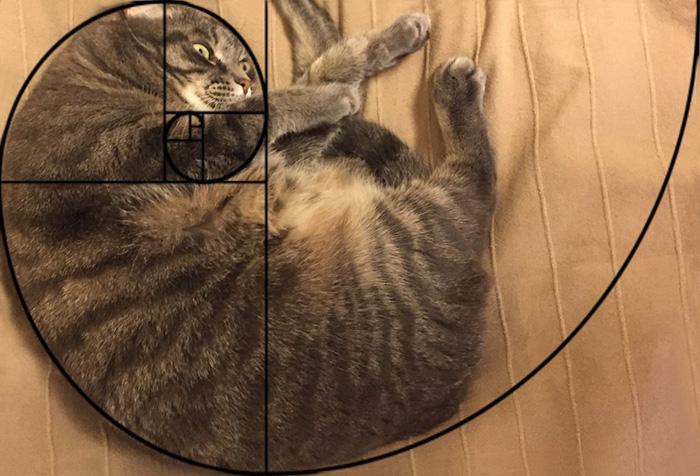 02-fibonacci-composition-cats