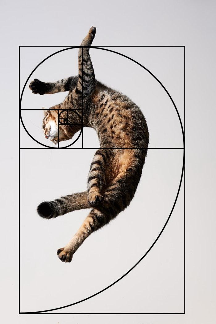 03-fibonacci-composition-cats