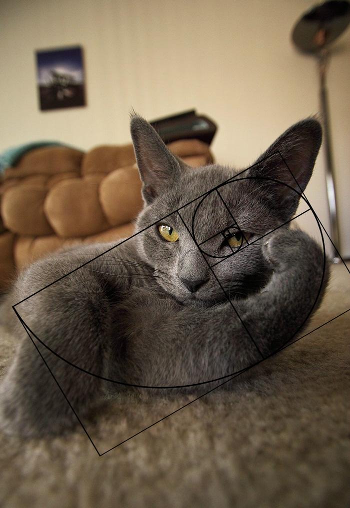 04-fibonacci-composition-cats