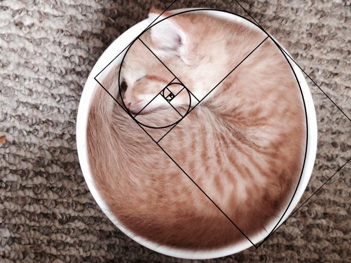 05-fibonacci-composition-cats