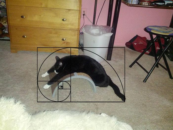06-fibonacci-composition-cats