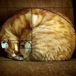 Последовательность Фибоначчи подтверждает идеальность котов