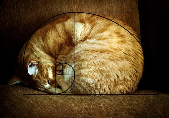 07-fibonacci-composition-cats