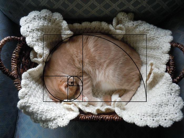 08-fibonacci-composition-cats