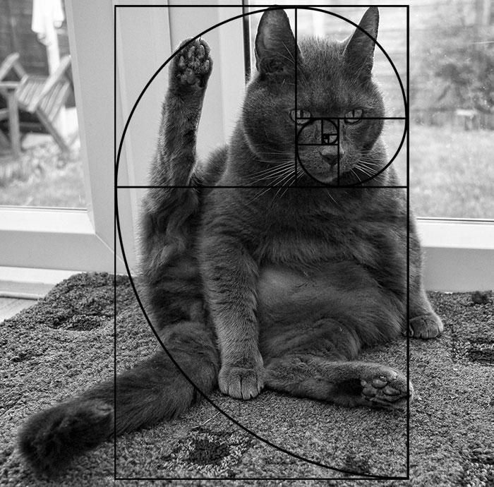 10-fibonacci-composition-cats
