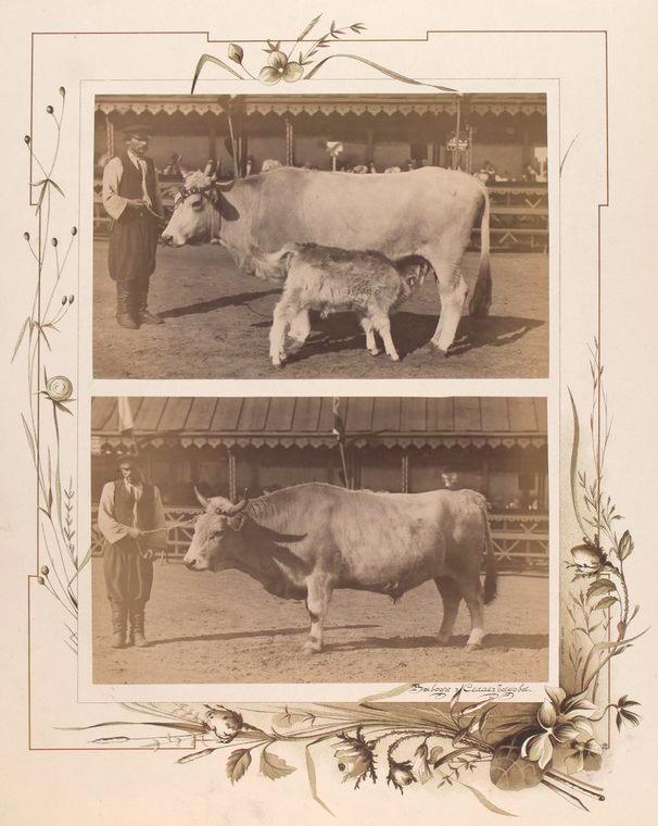107-vidi-Kishineva-1889