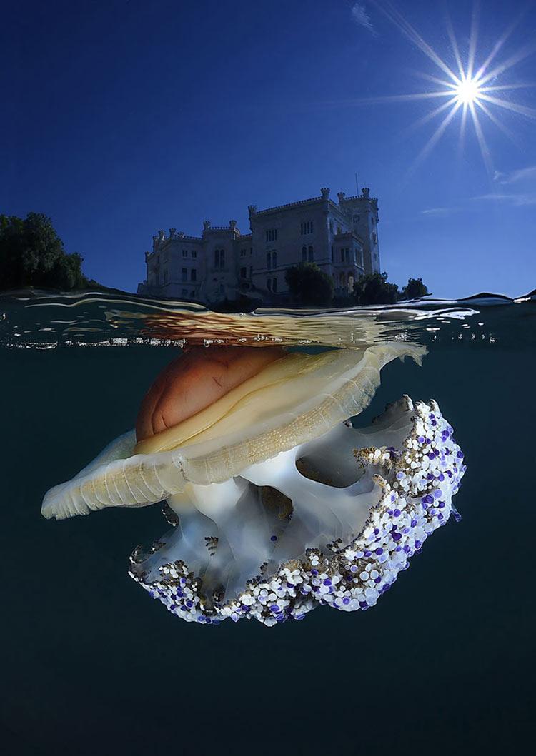 half-underwater-photography-14__880