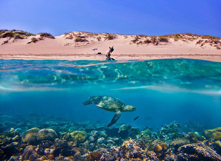 half-underwater-photography-15__880