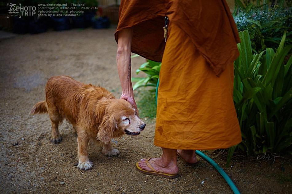 thailand2016_part3_047_950x633