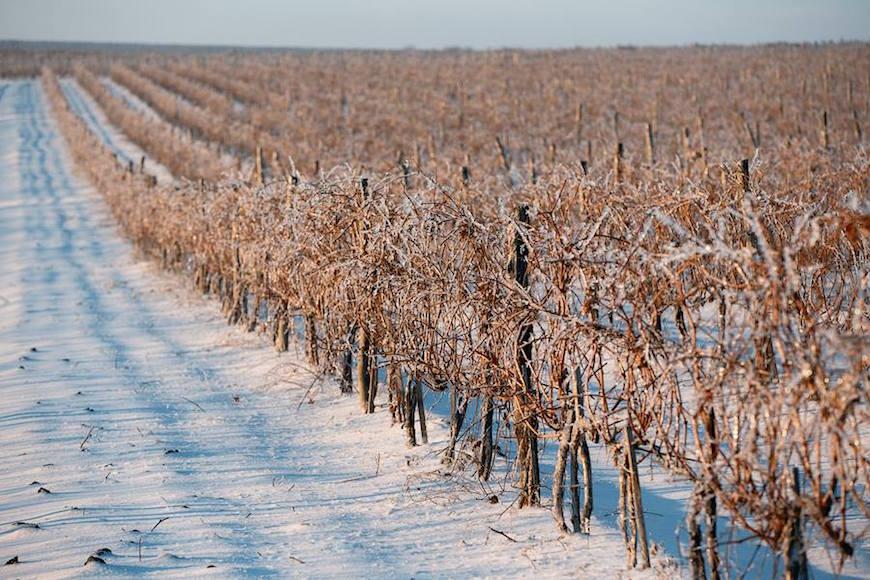 wineyard-chisinau-maxim-chumash00002