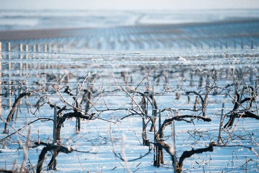wineyard-chisinau-maxim-chumash00004
