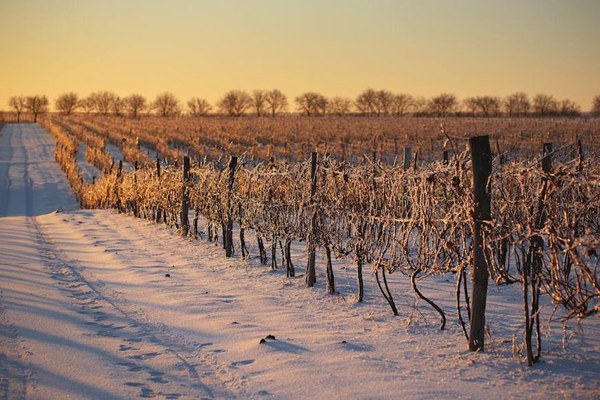 wineyard-chisinau-maxim-chumash00005