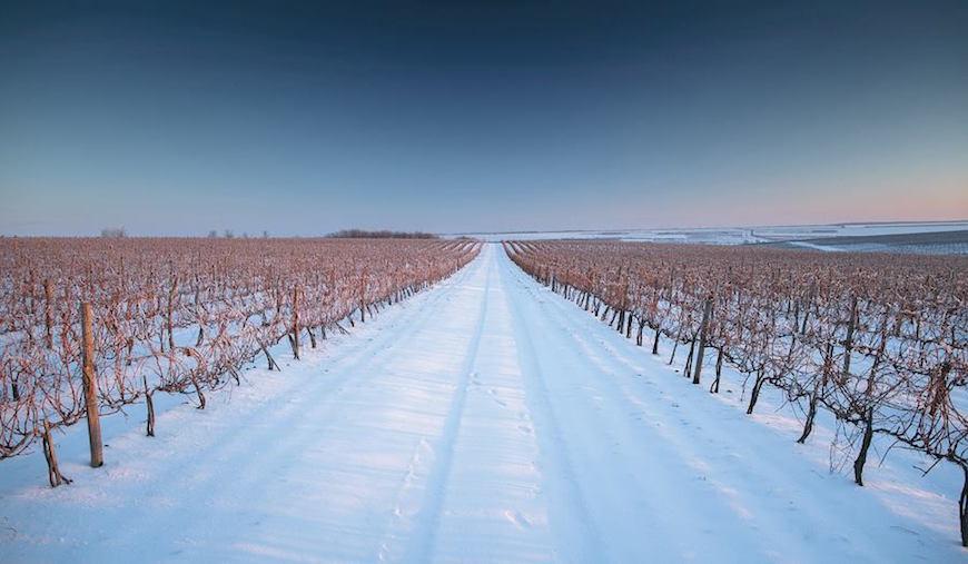 wineyard-chisinau-maxim-chumash00007