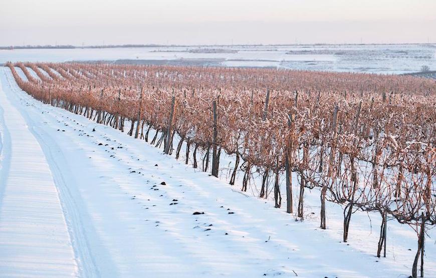 wineyard-chisinau-maxim-chumash00009