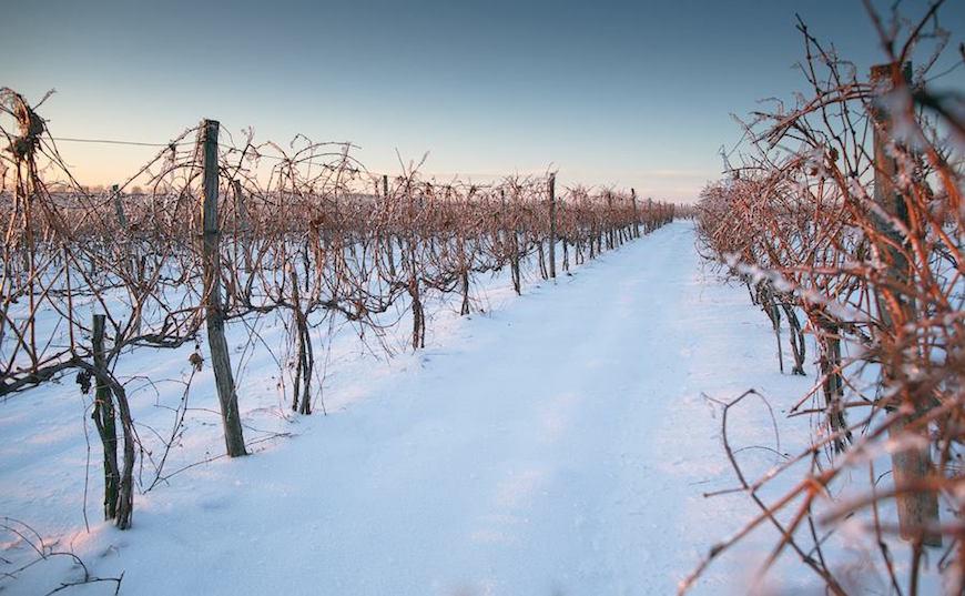 wineyard-chisinau-maxim-chumash00010