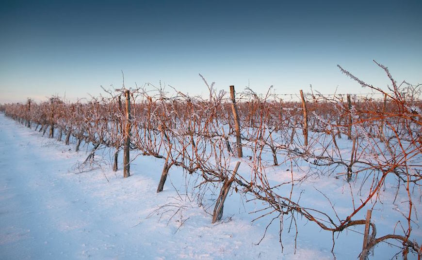 wineyard-chisinau-maxim-chumash00011