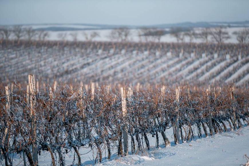 wineyard-chisinau-maxim-chumash00016
