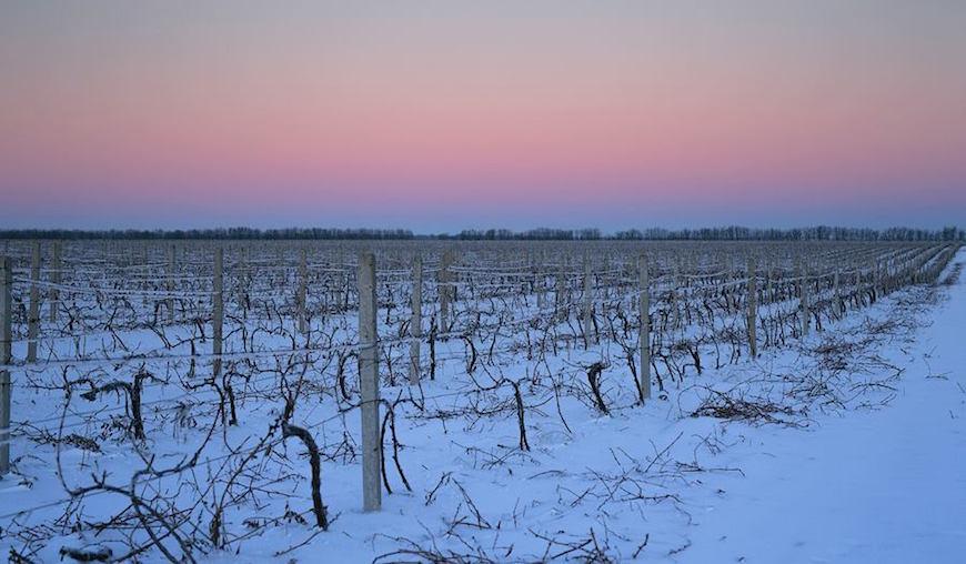 wineyard-chisinau-maxim-chumash00017