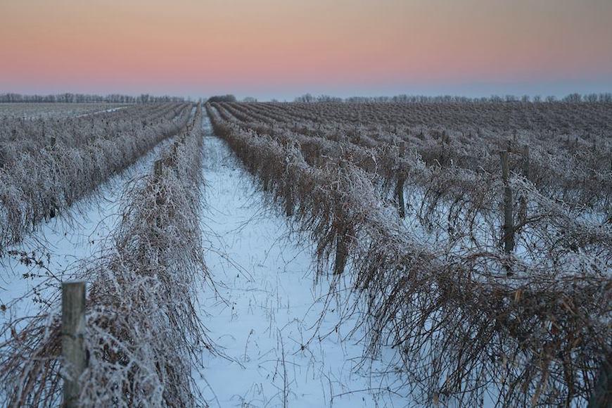 wineyard-chisinau-maxim-chumash00018