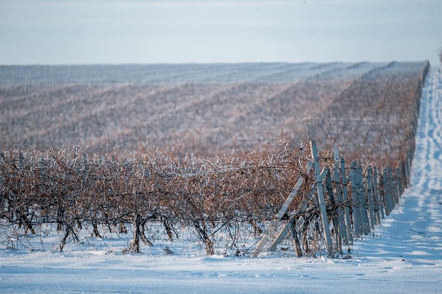 wineyard-chisinau-maxim-chumash00019