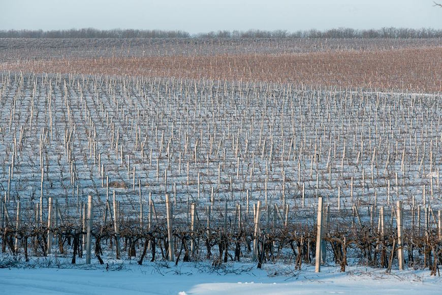 wineyard-chisinau-maxim-chumash00020