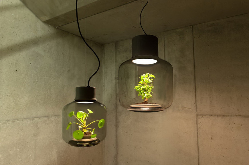 01-lamps-to-grow-plants