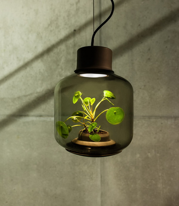 02-lamps-to-grow-plants