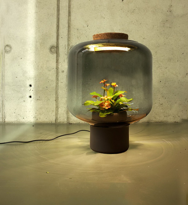 03-lamps-to-grow-plants
