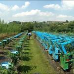 В Англии появилась ферма по выращиванию мебели