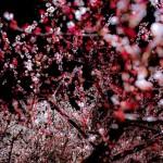 Минсельхоз отчитался о потерях урожая в результате апрельского снегопада