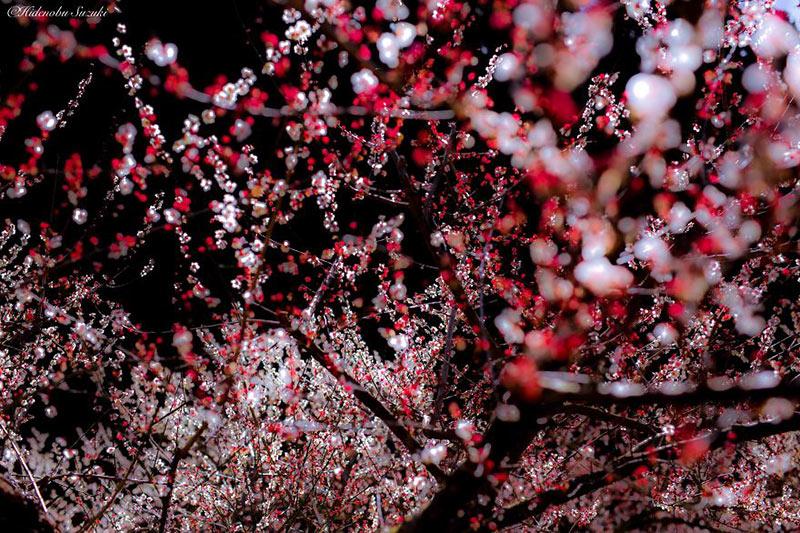 i-captured-spring-in-japan-10__880