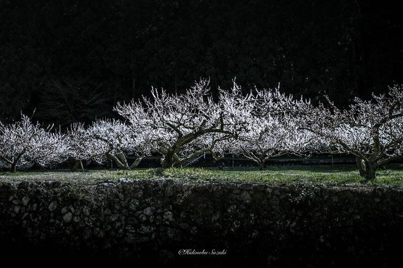 i-captured-spring-in-japan-3__880