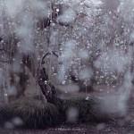 Весна в Японии в фотографиях Хиденобу Сузуки