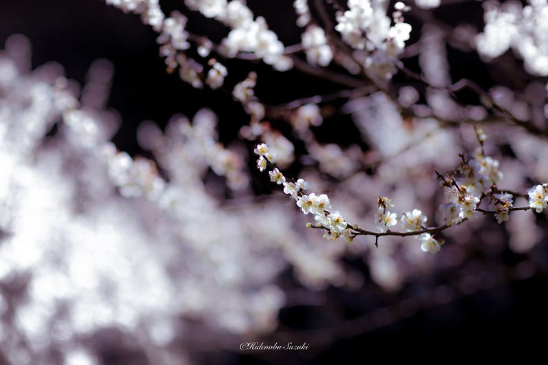 i-captured-spring-in-japan-9__880